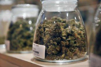 В США легальная марихуана снизила дорожную смертность